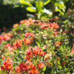 Camping Le Paradis - Blog La nature s'éveille - Fleurs