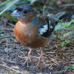 Camping Le Paradis - Blog - Faune et Flore - Oiseau